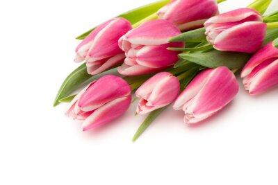 Fototapet Tulpaner rosa på den vita bakgrunden.