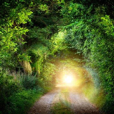 Fototapet Tunnel aus Bäumen Führt ins Licht
