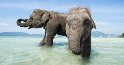 Fototapet Två barn elefant i havet. Banner upplaga.