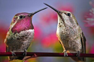 Fototapet Två kolibrier står bredvid varandra på en kvist med blommor i bakgrunden.