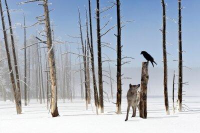 Fototapet Två sekunder för att leva - Wolf and Raven