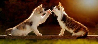 Fototapet Två unga katter som leker på en planka mot ljuset