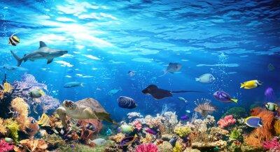 Fototapet Undervattensplats med korallrev och exotiska fiskar