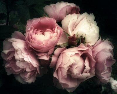 Fototapet Vacker bukett rosa rosor, blommor på en mörk bakgrund, mjukt och romantiskt vintagefilter, som ser ut som en gammal målning