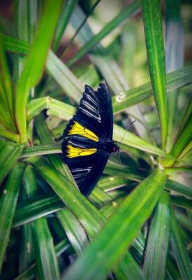Fototapet Vacker fjäril sitter på en stor blad