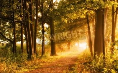 Fototapet Vacker höstplats inbjuder till en promenad på en dimmig stig i skogen med strålar av solljus