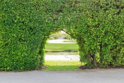 Fototapet vacker trädgård
