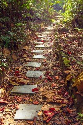 Fototapet Vacker utsikt över trappan till djungeln, Thailand
