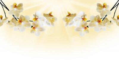Fototapet Vacker vit orkidé