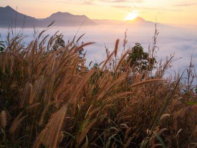 Fototapet Vackert landskap mycket dimma Phu Thok