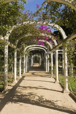 Fototapet Vackert välvda Pergola Oändlig Väg i Botaniska trädgården, Rio de Janeiro, Brasilien