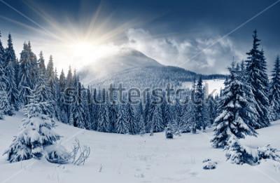 Fototapet Vackert vinterlandskap med snötäckta träd