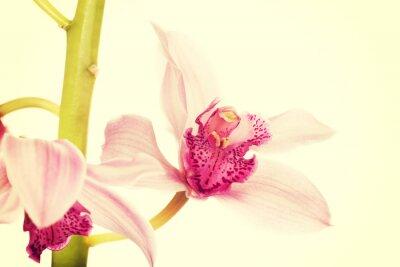 Fototapet Vackra färsk rosa lilja.