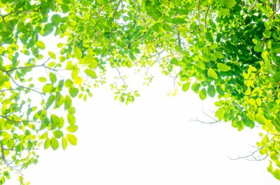 Fototapet Vackra gröna blad på vit bakgrund