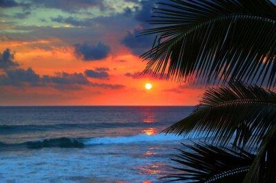 Fototapet vackra havet solnedgång och palmblad