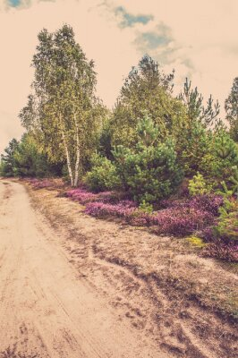 Fototapet Vackra landskapet med blommande ljung
