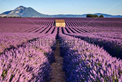 Fototapet Vackra lavendelmarker och ett gammalt hus i Provence