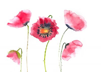 Fototapet Vackra röda vallmoblommor, akvarellmålning