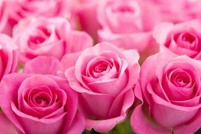 Fototapet vackra rosa ros blommor bakgrund