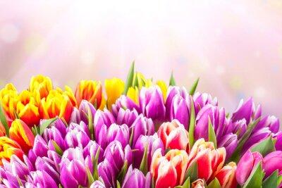 Fototapet Vackra tulpan blommor