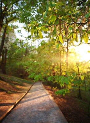 Fototapet Vägen i grön stadspark, tände strålar solnedgång