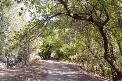 Fototapet Vägen i skogen