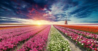 Fototapet Vägen som leder till de nederländska väderkvarnarna från kanalen i Rotterdam. Holland. nederländerna
