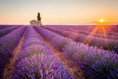 Fototapet Valensole, Provence, Frankrike. Lavendel fält fullt av lila blommor