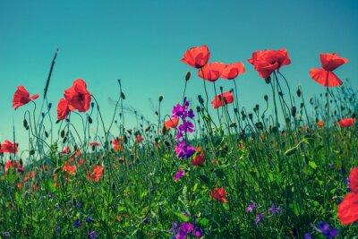 Fototapet Vallmo blommor mot himlen