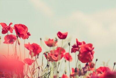 Fototapet Vallmo blommor retro fredliga sommar bakgrund