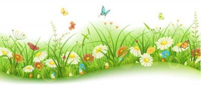 Fototapet Våren eller sommaren blommig banner med grönt gräs, blommor och fjärilar