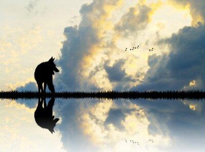 Fototapet varg på floden vid solnedgången