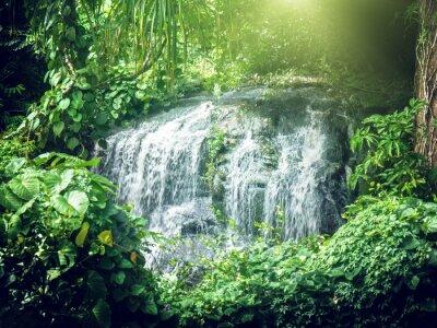Fototapet vattenfall i djungeln i Seychellerna, Mahe