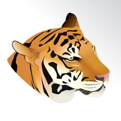 Fototapet Vektor illustration av tiger huvud porträtt isolerad på vit bakgrund.