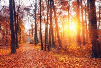 Fototapet Vibrerande solnedgång i höstskog