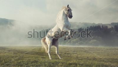Fototapet Vild vit häst