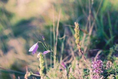 Fototapet vilda blommor