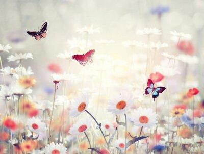 Fototapet vilda blommor på en äng