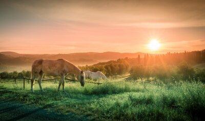 Fototapet Vilda hästar och toskanska soluppgång