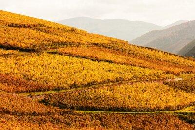 Fototapet vingårdar