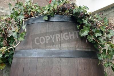 Fototapet Vinrankan växer från fat trä mörk