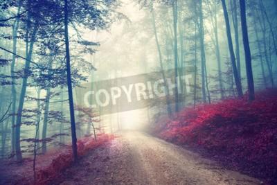 Fototapet Vintage färgeffekt höst skogsväg med fantasy ljus. Tappning filtereffekten används.