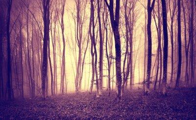 Fototapet Vintage lila gulfärgat mystiska ljus i skrämmande skogslandskap.