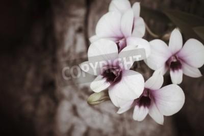 Fototapet Vintage orkidéblommor