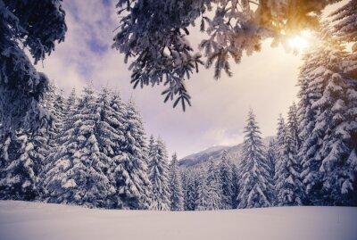Fototapet vinter-