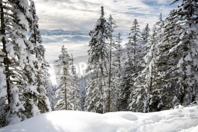 Fototapet Vinter skog i Alperna nära Kufstein i Österrike, Europa.
