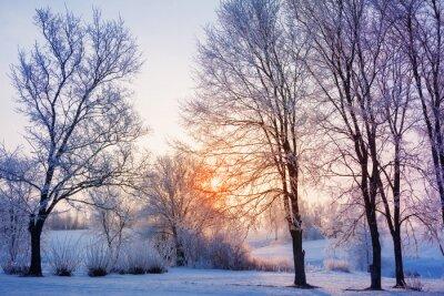 Fototapet vinter solnedgång