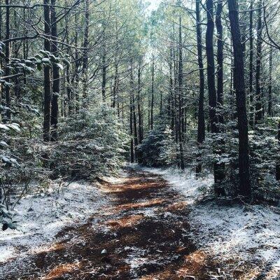 Fototapet vinter Woods