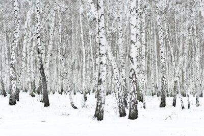 Fototapet vinterskog