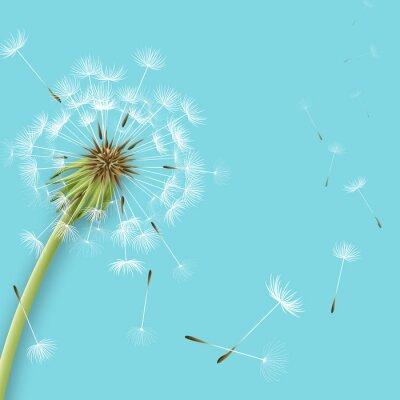 Fototapet Vit maskros med pollen som isolerats